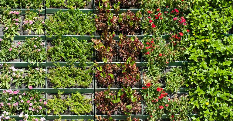 img-557725-jardim-vertical-e-solucao-para-falta-de-espaco20131022171382470113